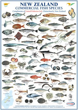 Nz Fish Species Fish Chart Sea Fish Types Of Fish