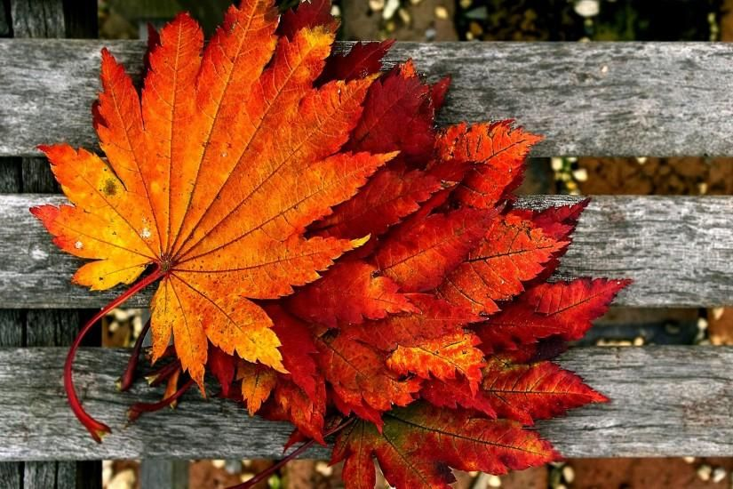 Autumn Wallpaper Hd Free Download Fall Facebook Cover Autumn Leaves Wallpaper Autumn Wallpaper Hd