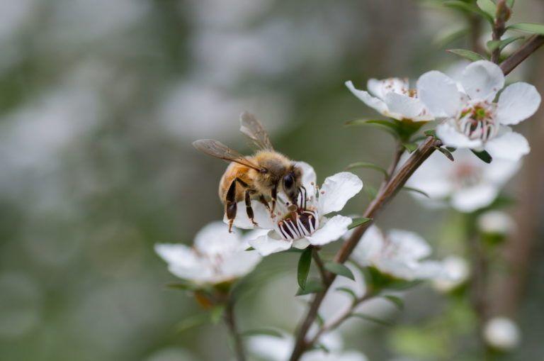 Bienenfreundliche Straucher Die 15 Schonsten Bienenstraucher Plantura Bienenfreundliche Straucher Bienenfreundliche Pflanzen Bienenfreundlicher Garten