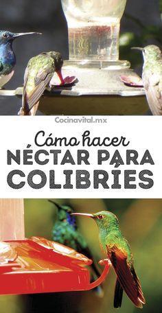 Cómo hacer néctar casero para colibríes y atraerlos al hogar