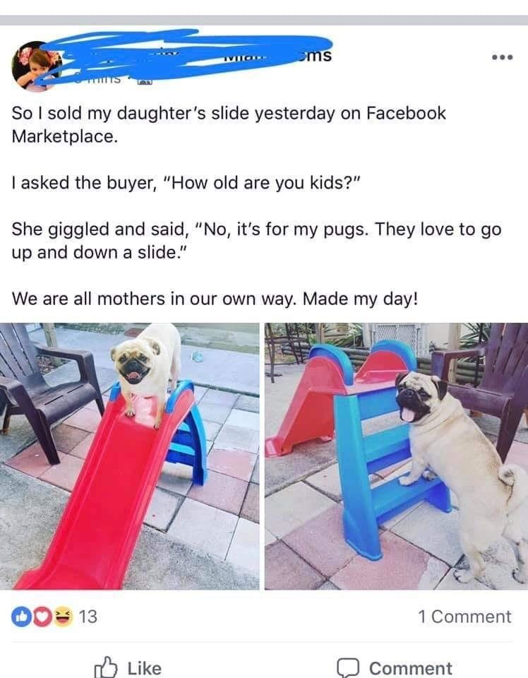 17 Wholesome Memes To Start The Week Off Right Cute Funny Animals Funny Animals Wholesome Memes