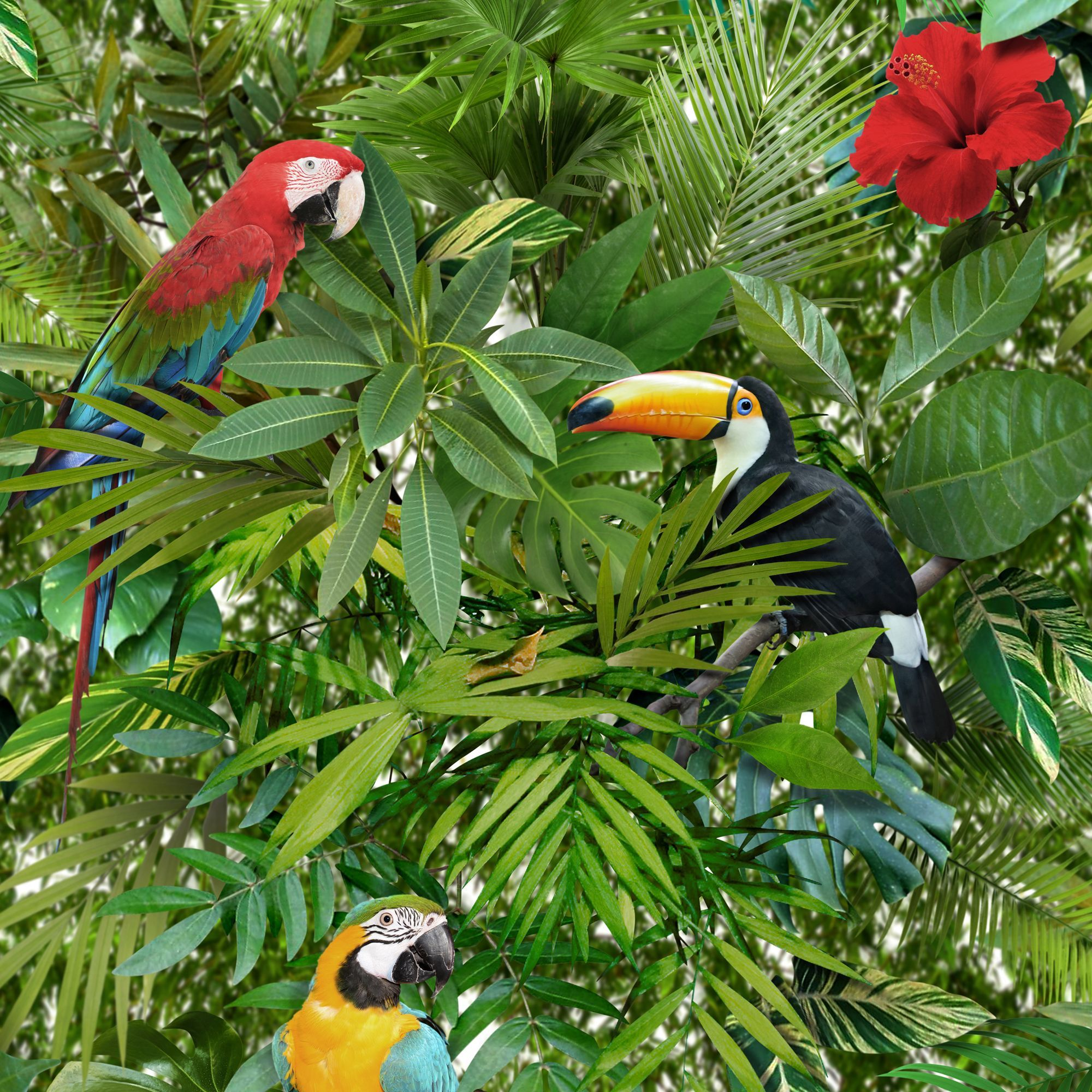 Muriva Tropical Jungle Green Leaves & Birds Wallpaper