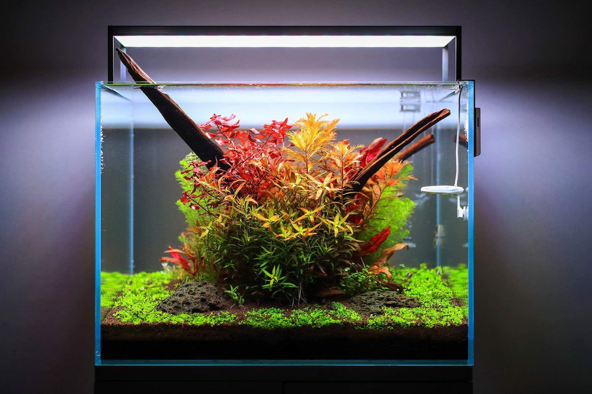 этих растения для нано аквариумов фото недавнего времени сеймицкая