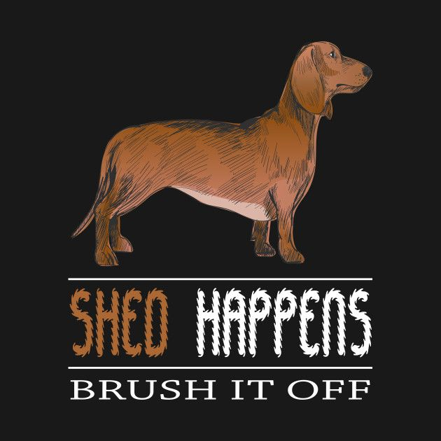 Check Out This Awesome Dachshund Shed Happens Brush It Off