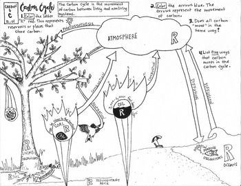 Carbon Cycle Coloring Sheet