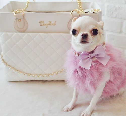 Follow Your Dreams Princess They Know The Way Pinterest Princess Anna Louise In 2020 Kleidung Fur Hunde Chihuahua Kleidung Babyhunde