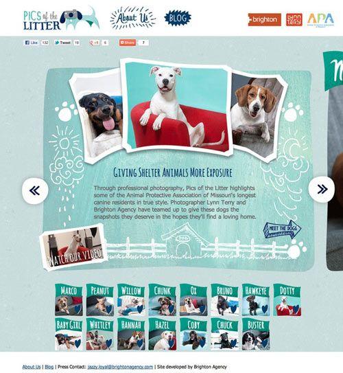 Animal Website Design Showcase Http Atticuspetdesign Com Blog