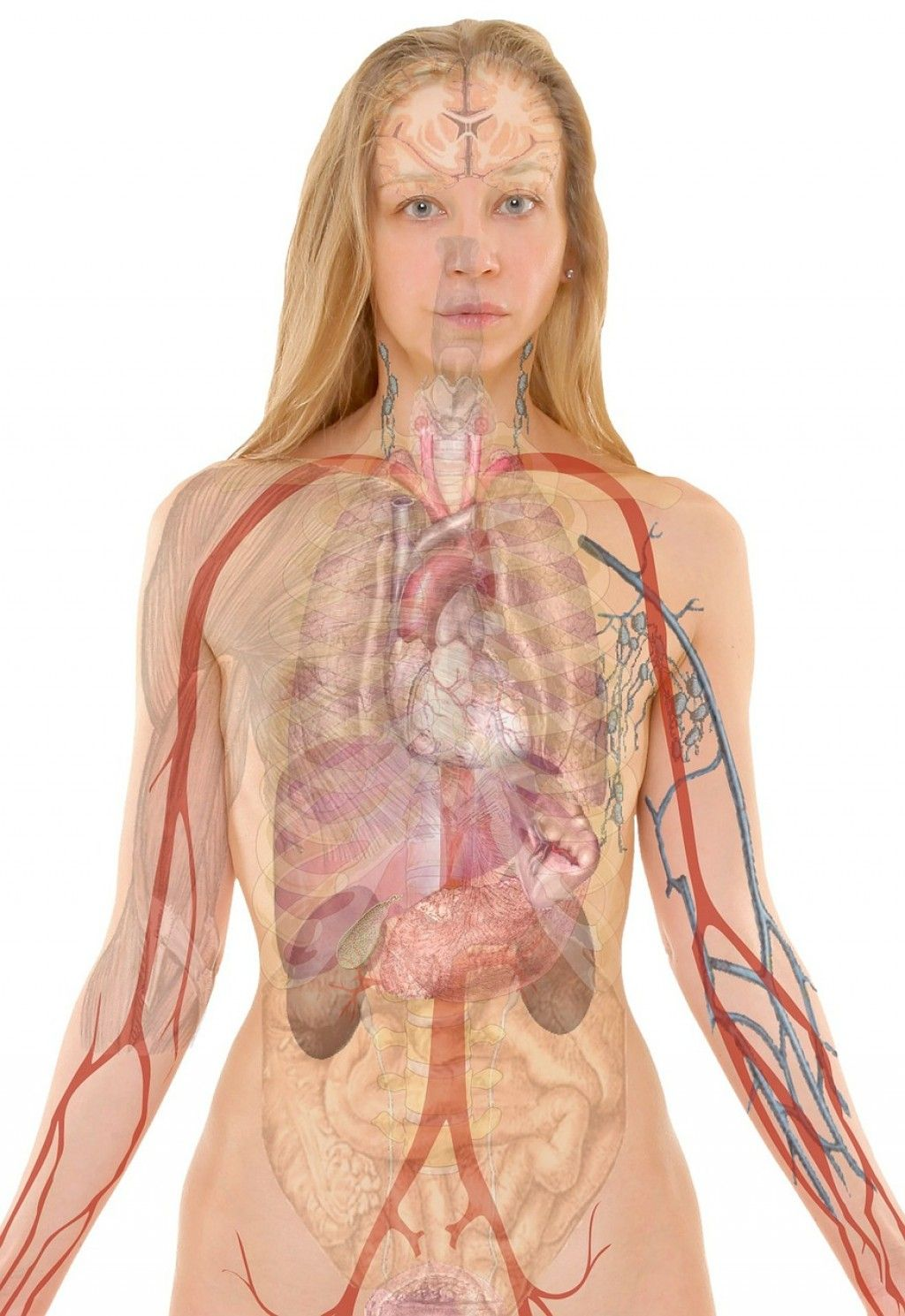 Nice Learn Anatomy And Physiology Online Picture Collection - Human ...