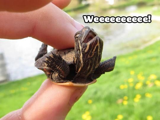 Aww.. probably the happiest turtle ever ! :3