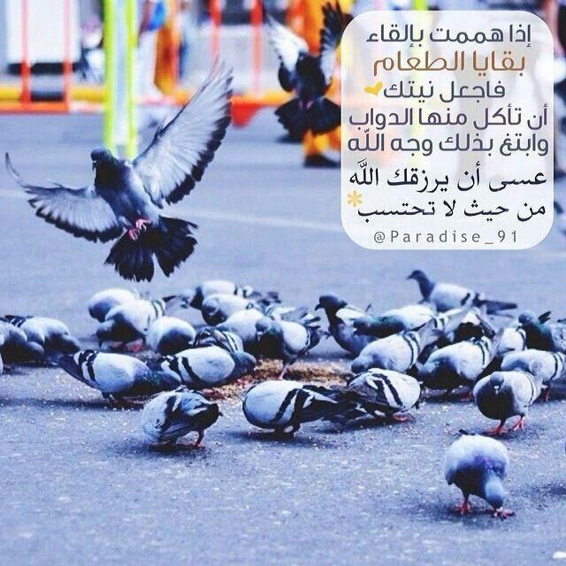 تذكروا افعل الخير مهما استصغرته فلا تدري أي حسنة تدخلك الجنة Arabic Quotes Places To Visit Islam