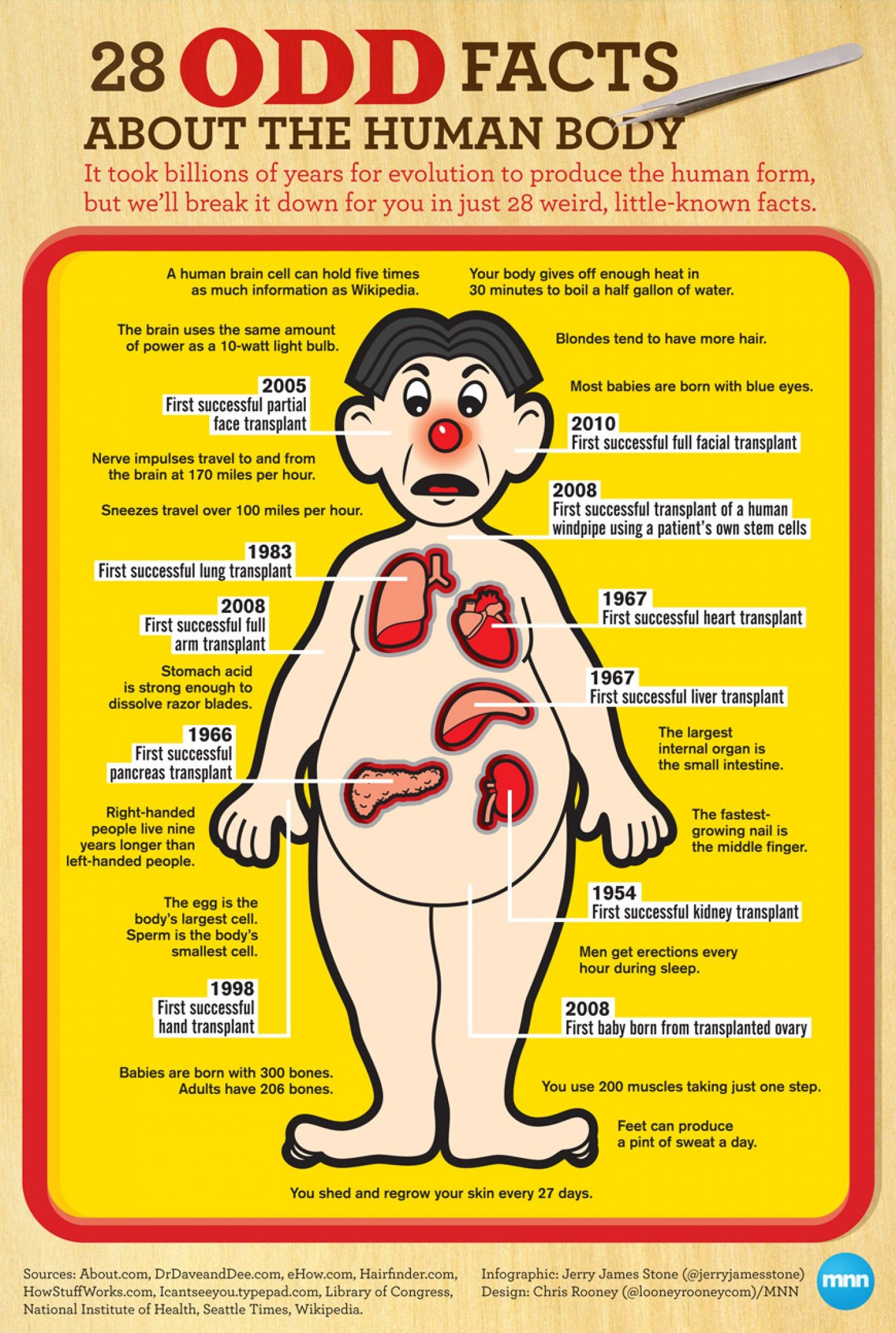 28 Odd Facts About the Human Body Infographic Register to become ...