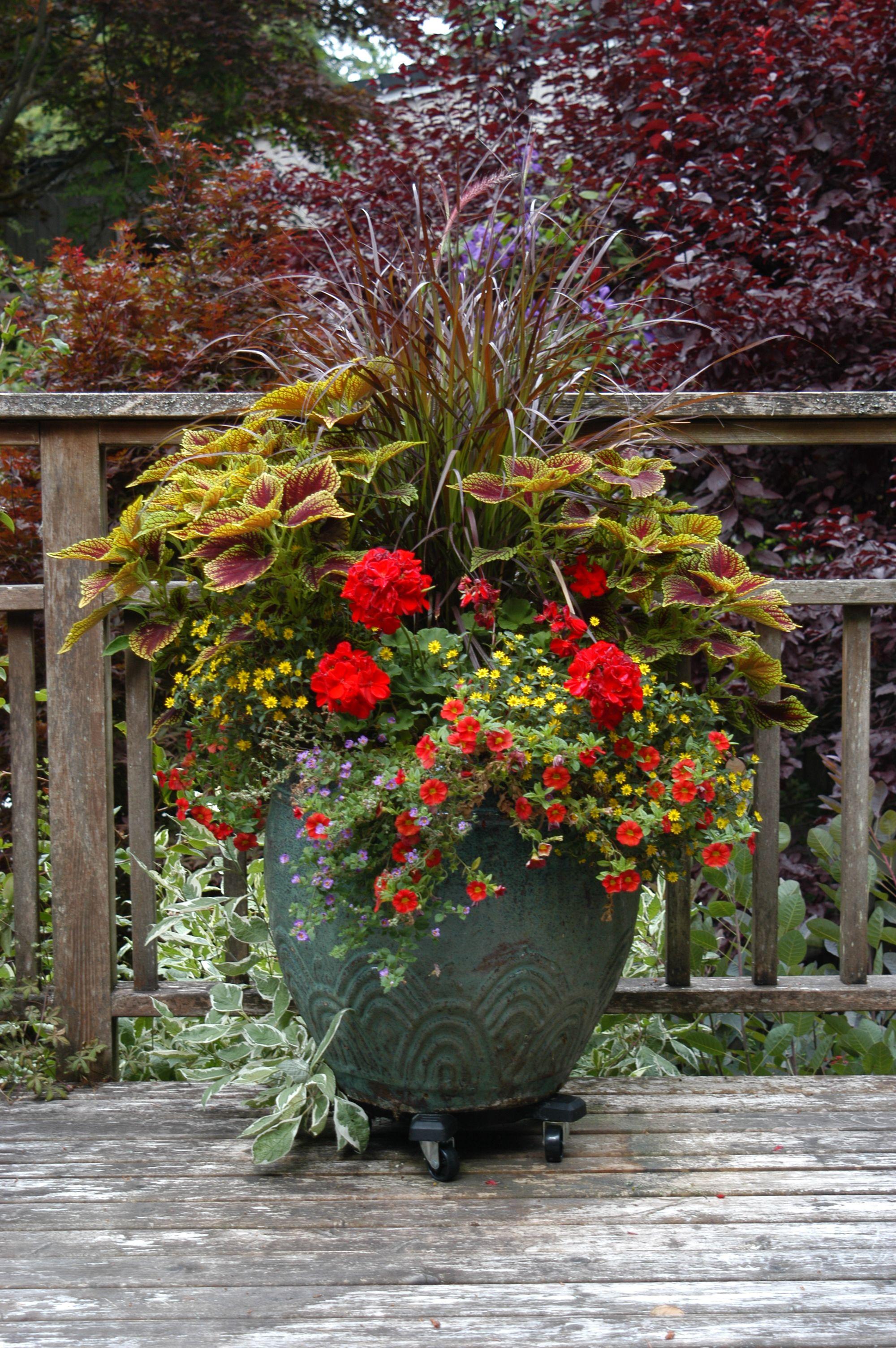 Large planter on lower deck: purple fountain grass, coleus ...