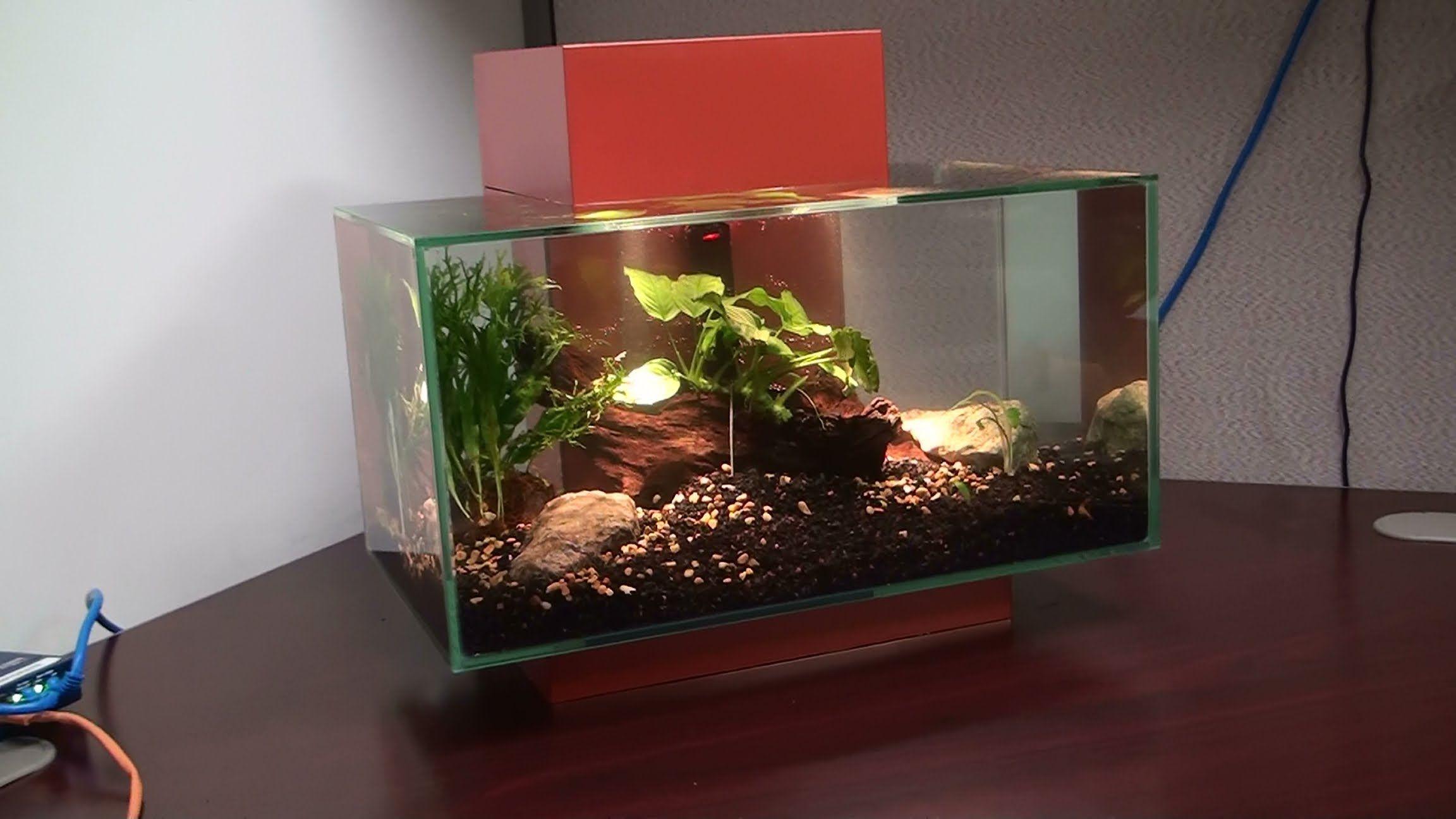 Freshwater aquarium fish boise idaho - Watches
