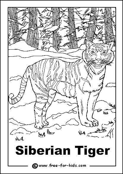Siberian Tiger Colouring Page Siberian Tiger Animal Coloring
