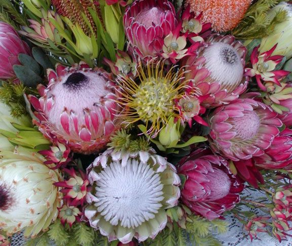 A Resendiz Bouquet In Which Protea Is Paired With Pincushion Flower Leucospermum Protea Flower Flower Farm Floral Industry