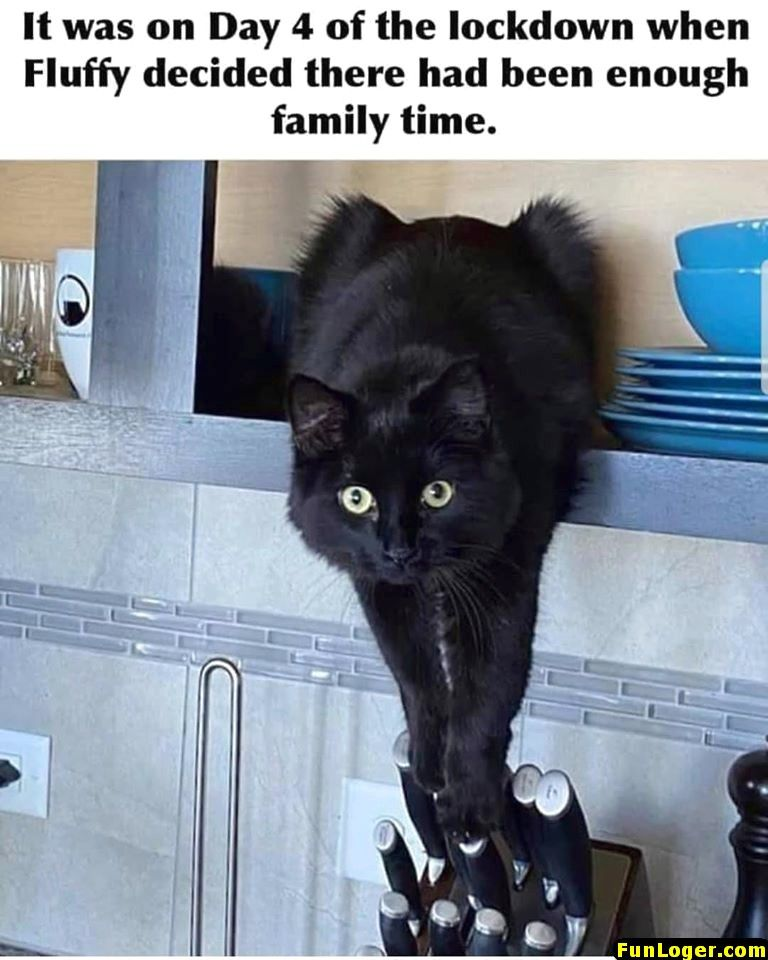 10 Funny Pictures Of Today Funloger Funny Cat Memes Funny Animal Memes Funny Animal Jokes