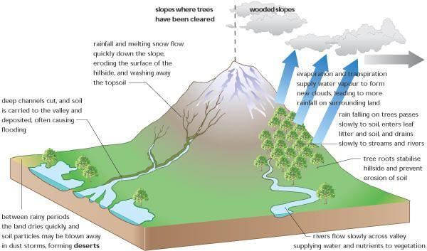 Deforestation Effects Deforestation Effects | Cambio climático ...