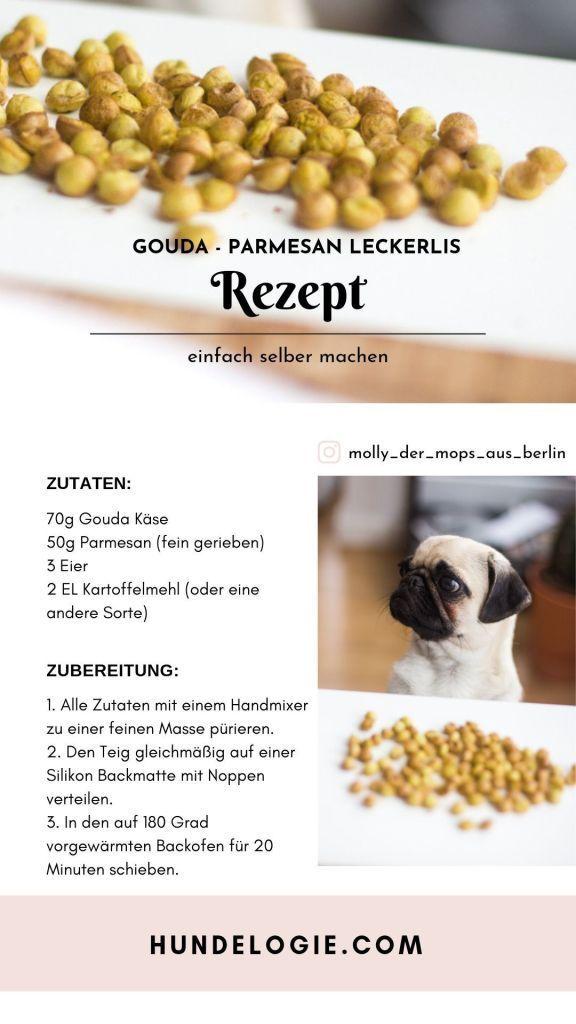 Hunde Rezepte