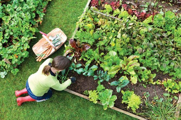 Garten Selbst Gestalten Gemüse Anbauen