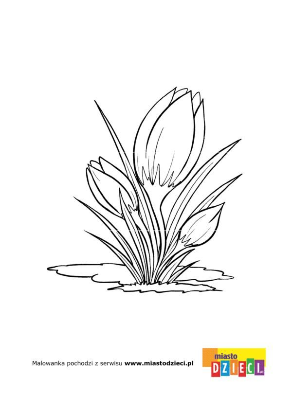 Kolorowanka Krokus Flower Sketches Colorful Pictures Coloring Pages