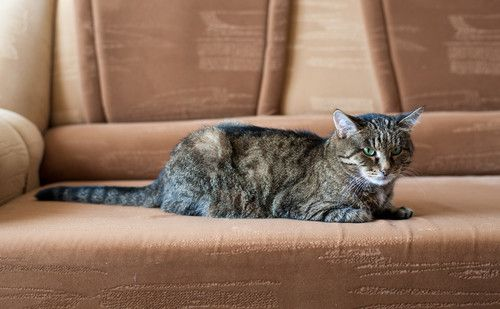 What-is-the-Best-Sofa-Fabric-for-Pets- | Ideas | Fabric sofa ...
