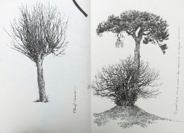 Carnet d 39 arbres etc art dessin arbre dessin et dessin paysage - Arbres dessins ...