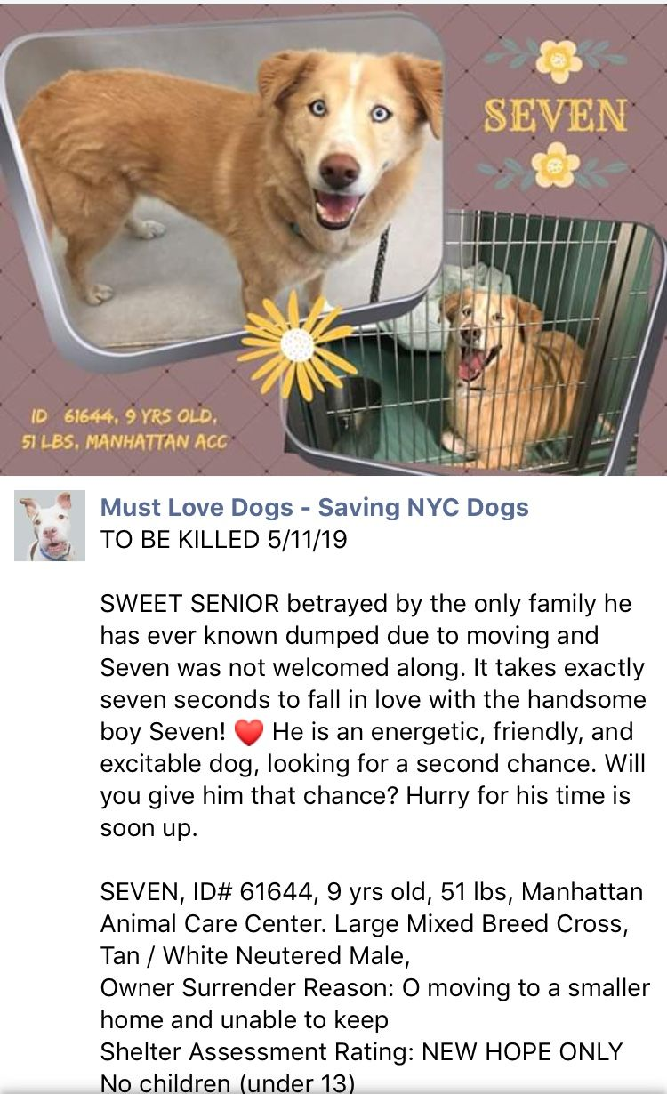 PRECIOUS INNOCENT SEVEN LISTED TO DIE 5/11/19 AT THE HIGH