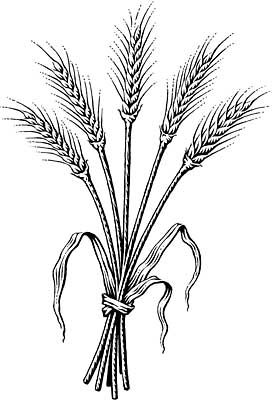 Part I Introducing Grassroots Spirituality From The Council Of Light Wheat Drawing Wheat Bundle Outline Drawings