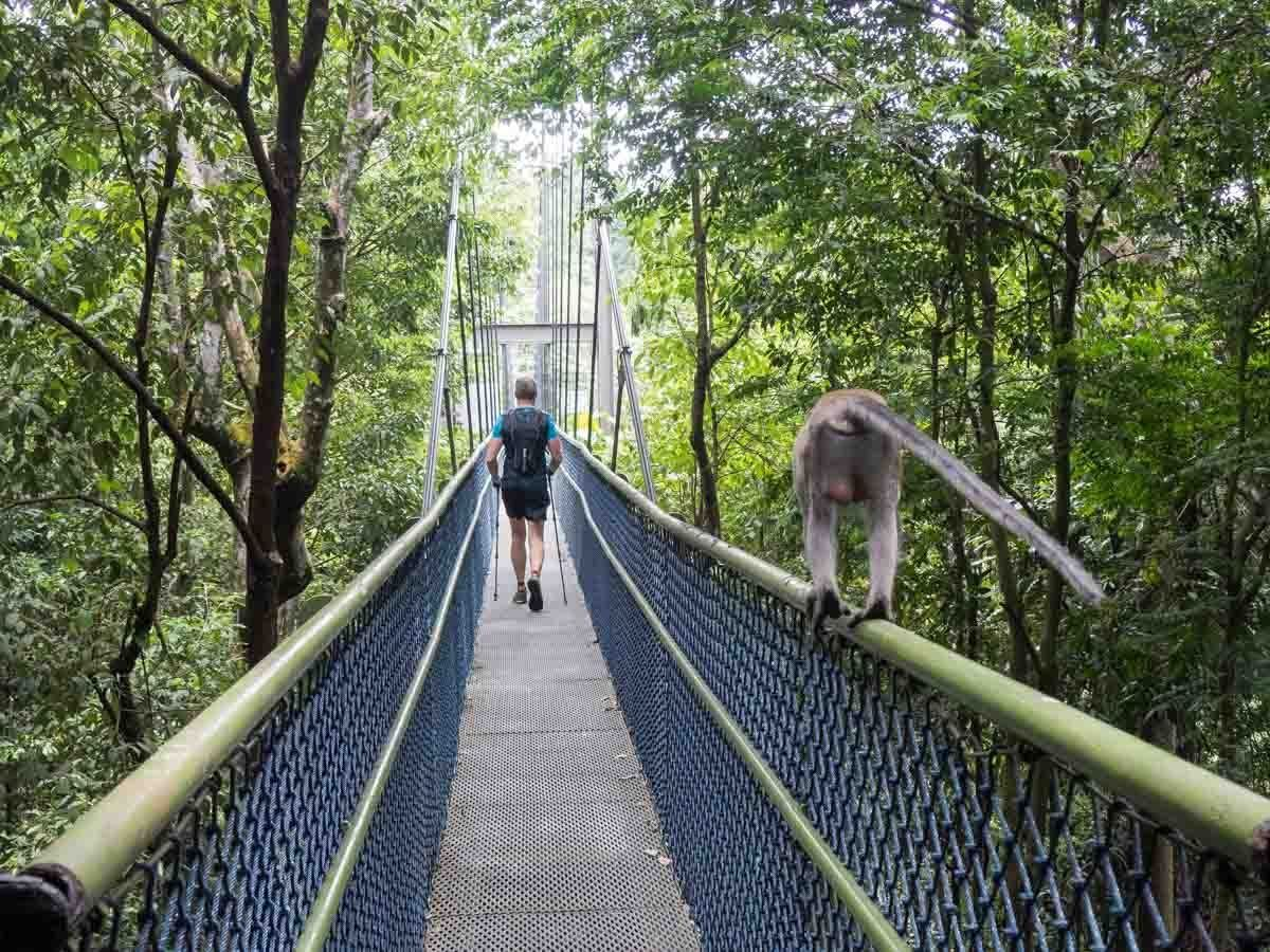 A 3 Day Singapore Itinerary For Art And Nature Lovers Singapore Itinerary Singapore Travel Stay In Singapore