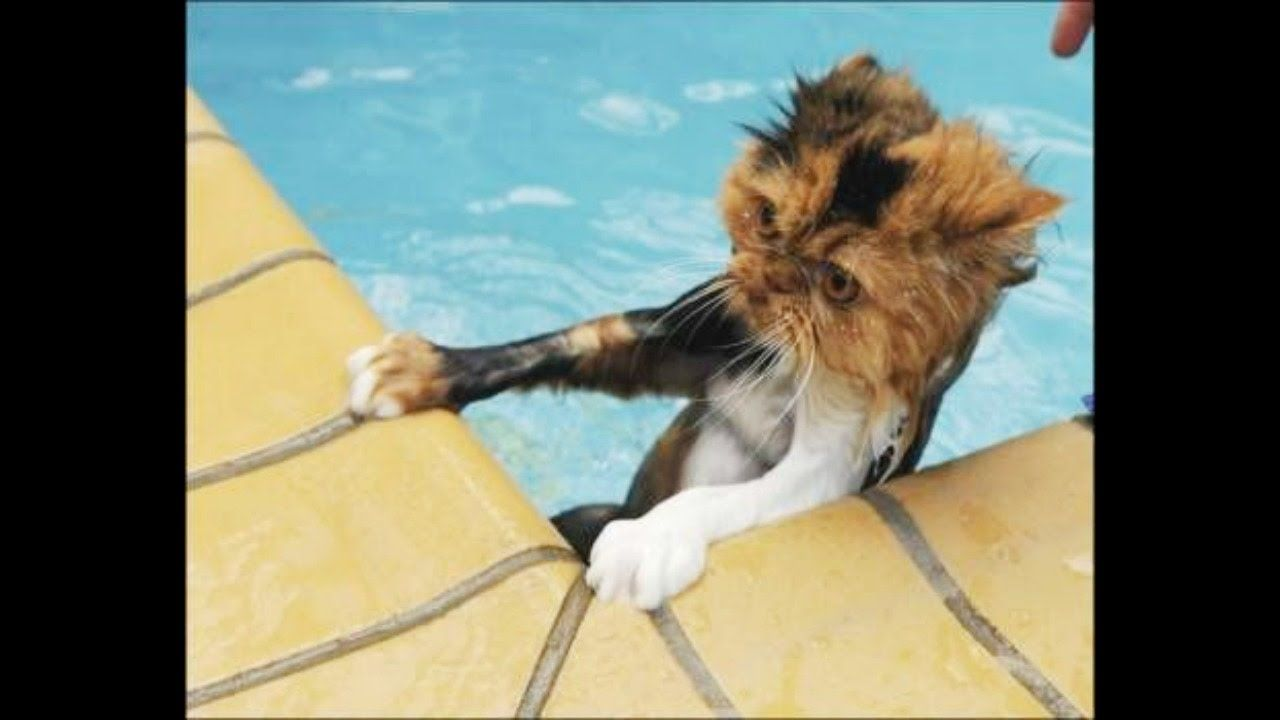 Cats Hate Falling in Water 2017 Try not to laugh Funny cats