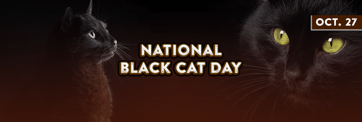Black Cat Appreciation Day Black Cat Appreciation Day Black Cat Cat Holidays