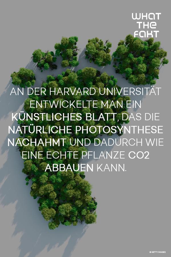 Neue Ideen Gegen Den Klimakiller Co2 Erderwarmung Photosynthese Neue Wege