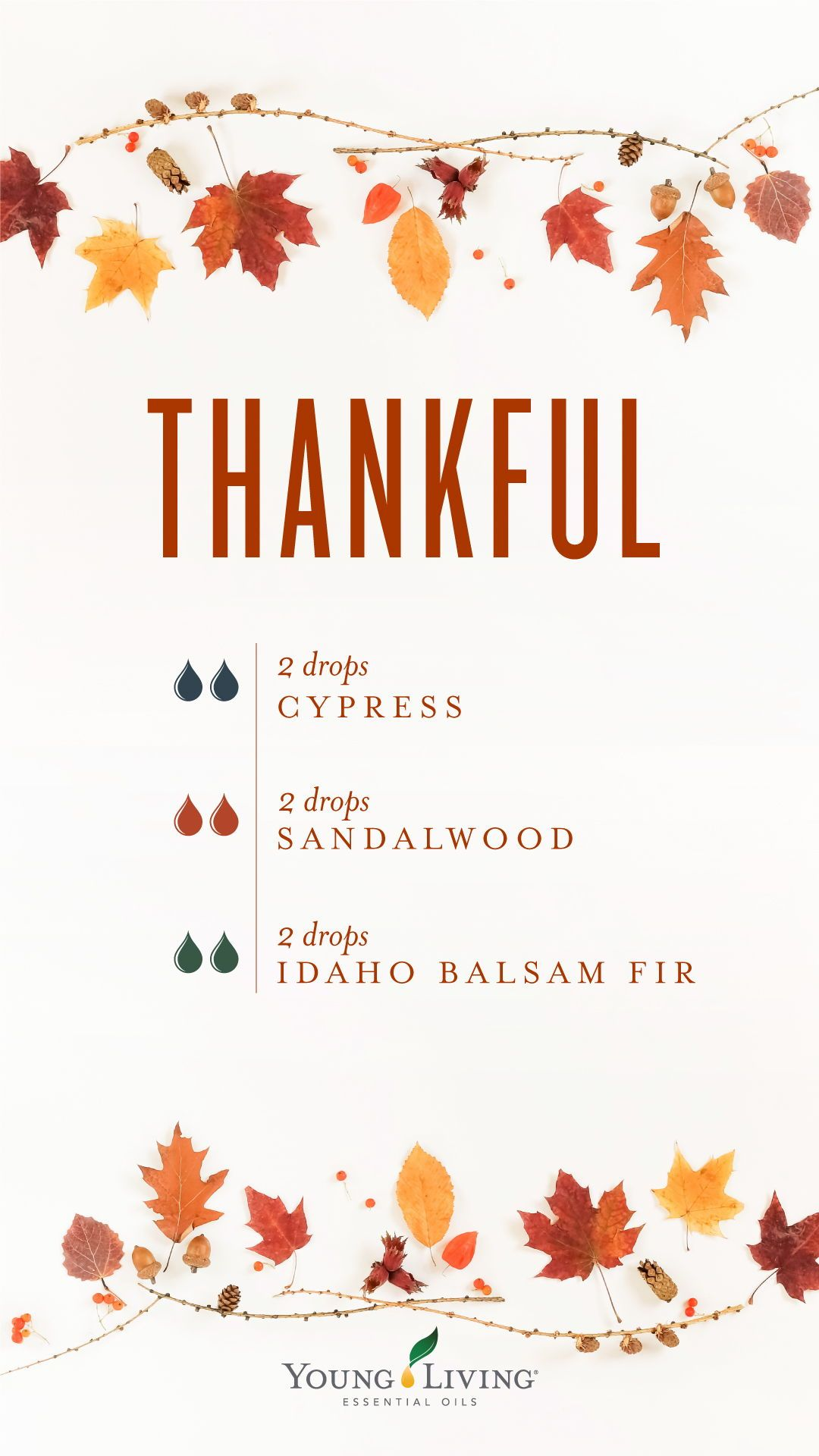 Sacred Sandalwood Essential Oil - 5 ml | Diffuser Blends