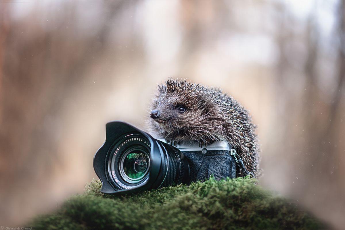 что малышка курсы фотографии животных сожалению пришло много