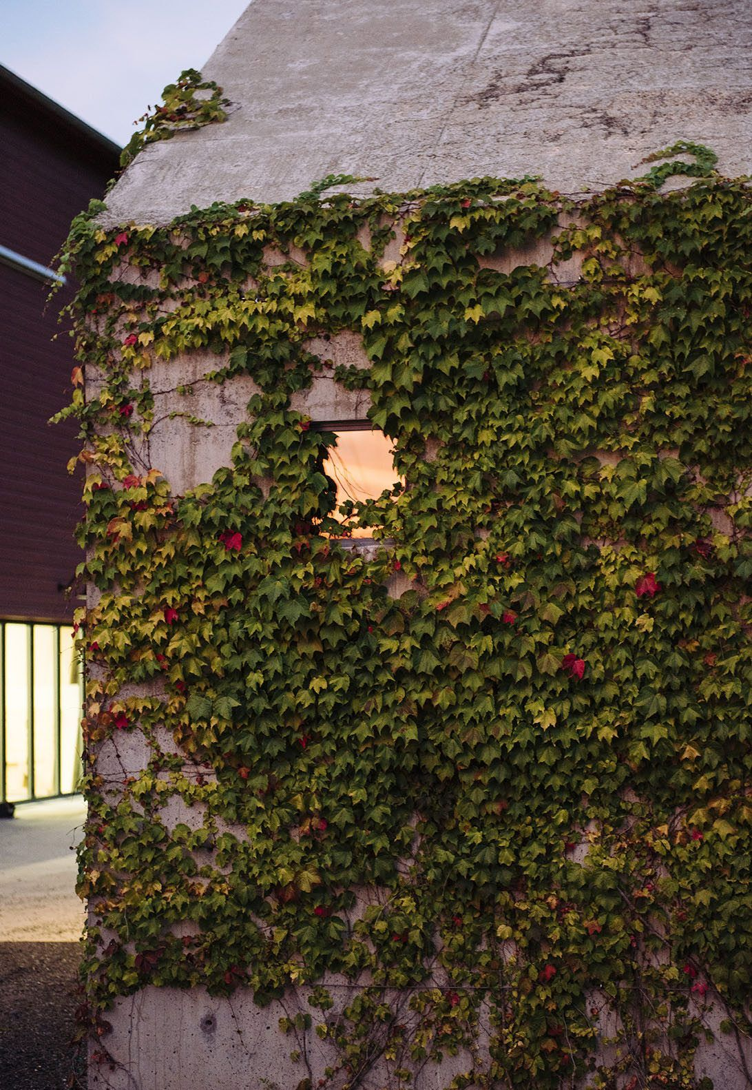 The Ivy League: An Artist\'s Welding Workshop Covered in Vines in ...