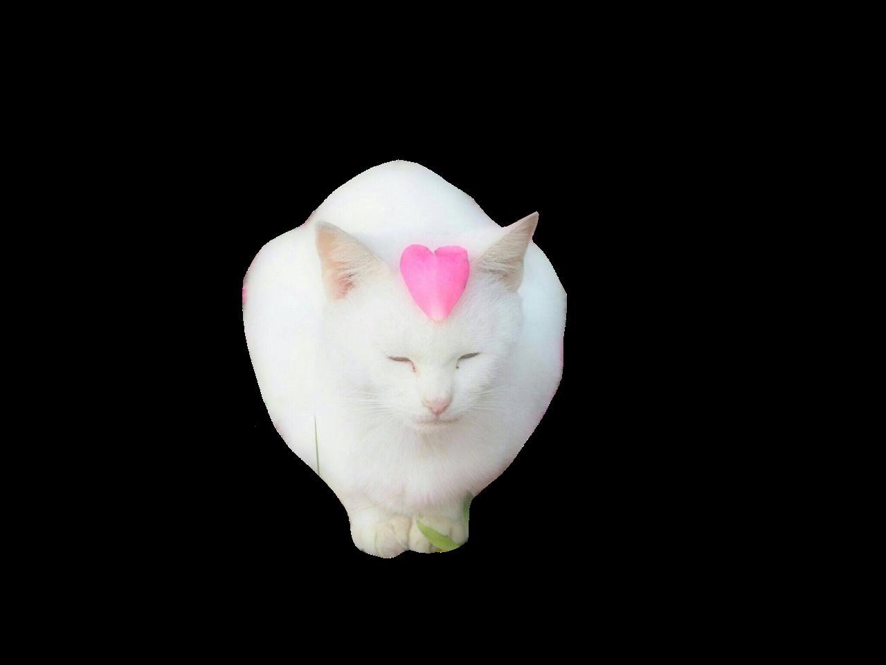 Cat Png Rat Man Pink Cat Png