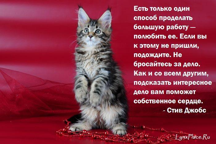 стихи про котика любимого начальном