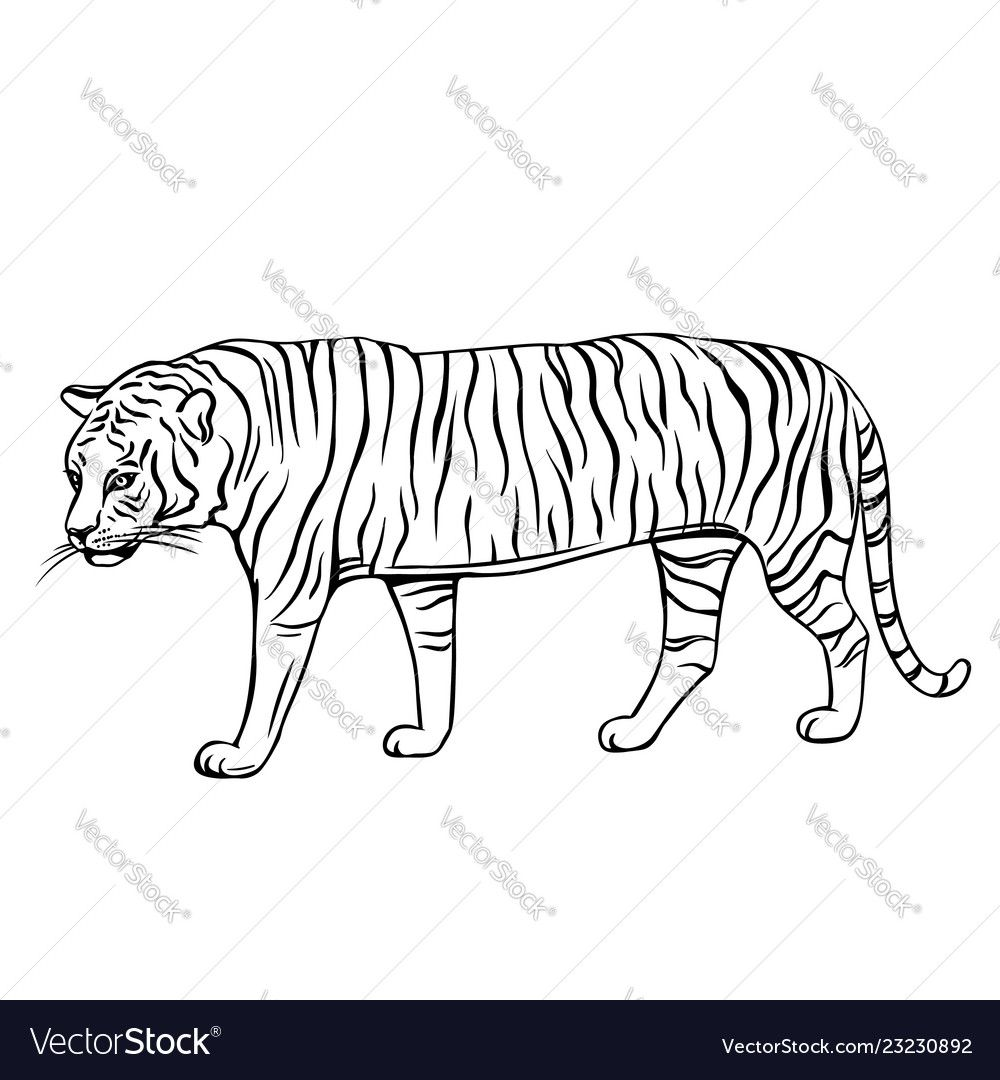 Hand Drawn Tiger Icon Engraved Vector Illustration Of Zoo Animal Download A Free Preview Or High Quality Adobe I Tiger Icon Vector Illustration Vector Images