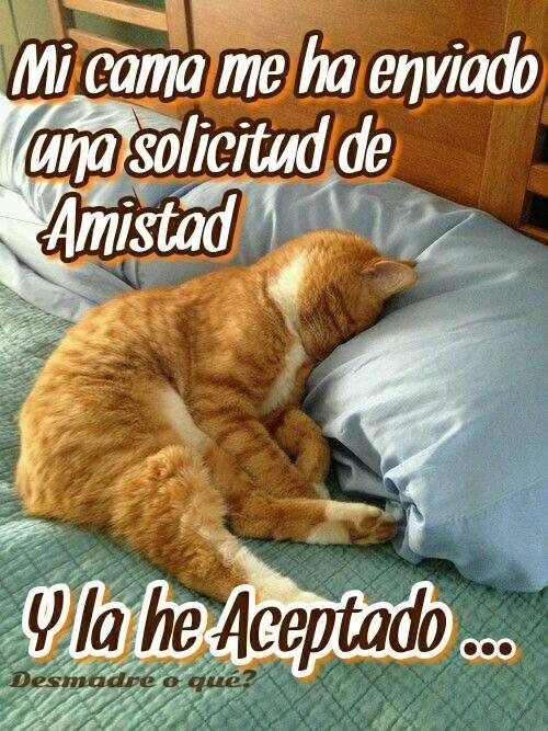 Imagen De Buenas Noches Meme Gato Humor Divertido Sobre