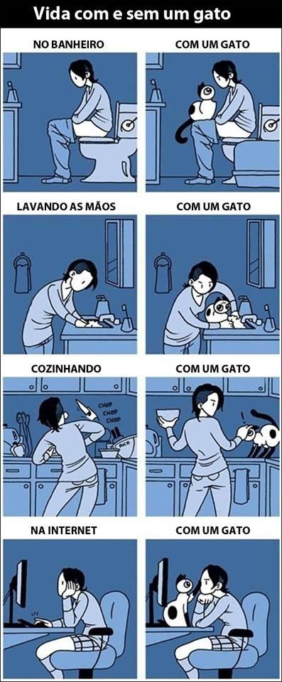 vida com e sem gato