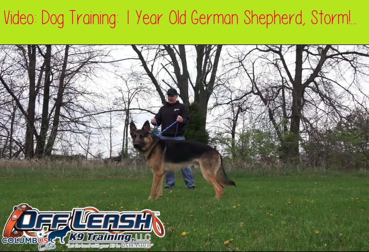 Dog Training 1 Year Old German Shepherd Storm Before After 2