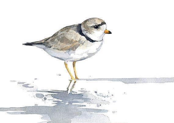 Plover Tattoo Recherche Google Peinture Oiseau Peinture Et