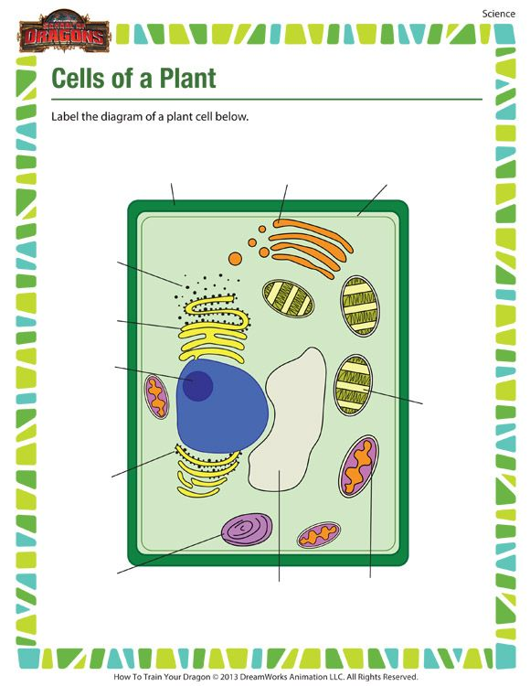 Cells Of A Plant Printable Science Worksheets For 5th