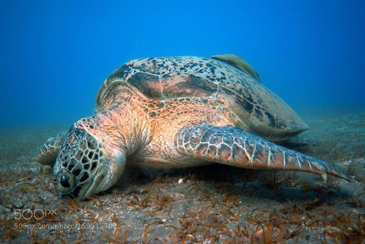 Turtle having a meal