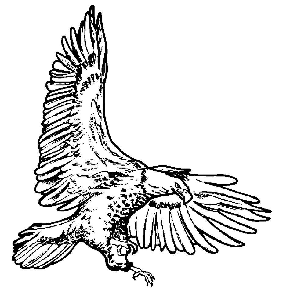 47+ American eagle clipart black and white info