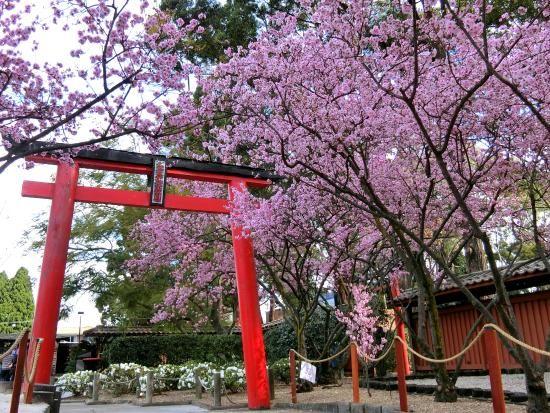 Auburn Botanic Gardens Botanical Gardens Japanese Garden Botanical Gardens Wedding