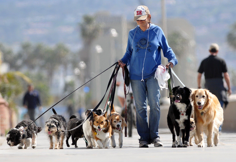 How To Hire A Dog Walker Dog Walking Business Dog Walking Dog