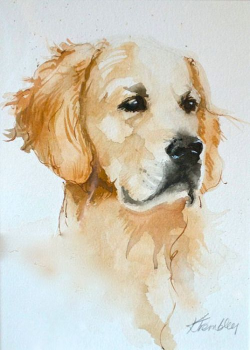 Golden Retriever Watercolor By Kris Trembley Golden Retriever
