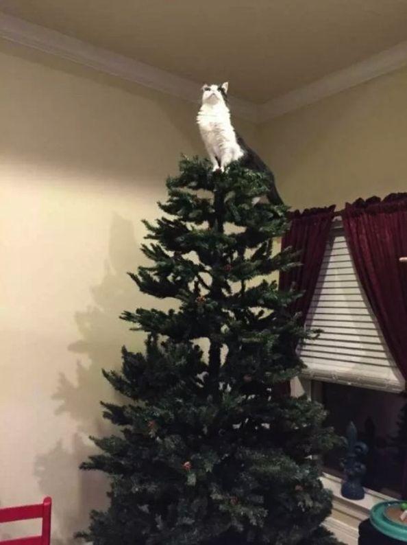 Cats Vs Christmas Trees.Cats Vs Christmas Trees 33 Pics Cats Christmas Cats