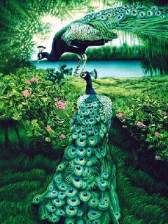 Download Peacock Fantasy Mobile Wallpapers for your cell ...  Download Peacoc...